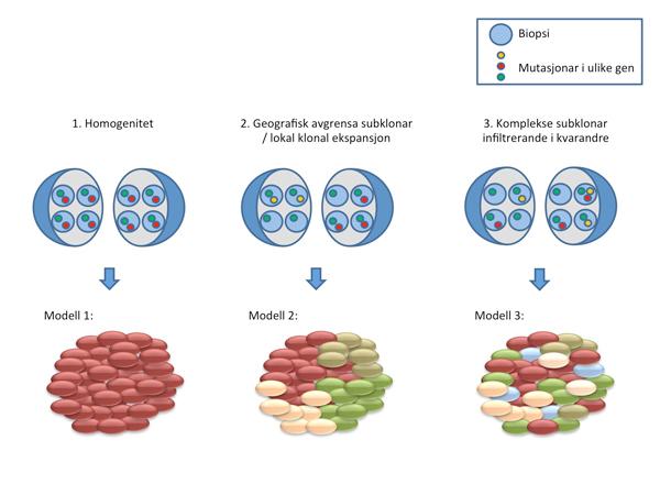 Figur_2_Biopsi