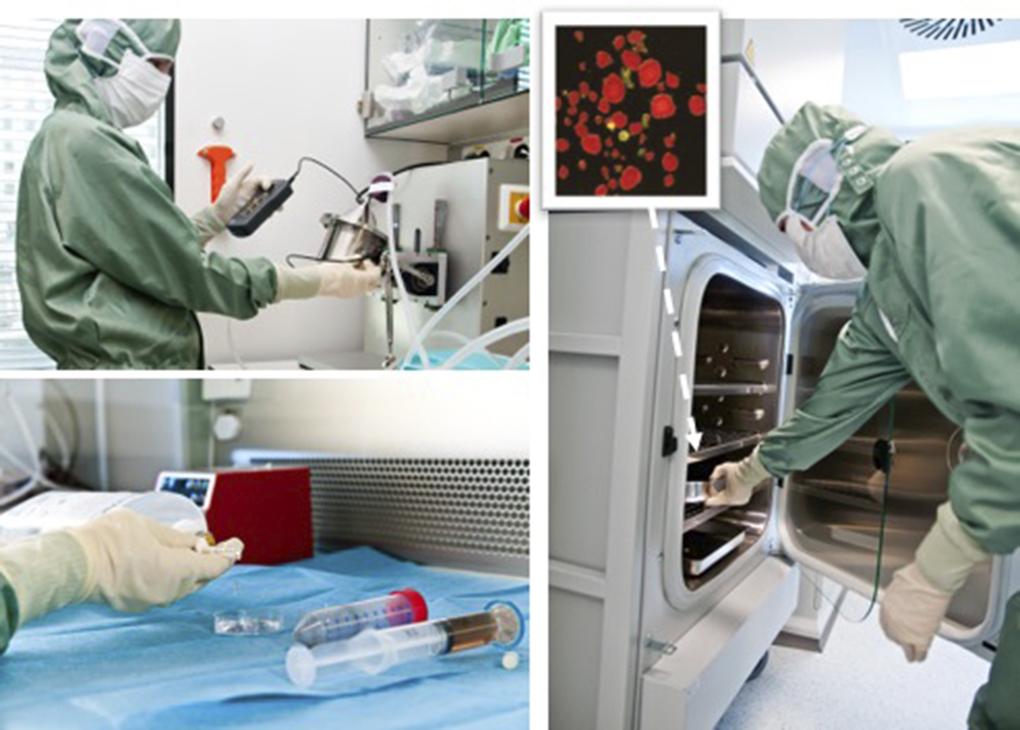 Figur 3: Ex vivo laboratoriet, avd. for celleterapi, OUS for øycelleisolering. Innfelt mikroskopi bilde av rene humane øyer farget røde klare for transplantasjon. Foto: Per Marius Didriksen