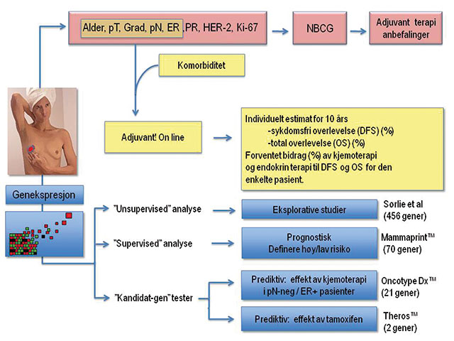 Figur 6. Oversikt over algoritmer, verktøy og molekylærbiologiske tester til hjelp i prognose og prediksjon av brystkreftpasienter. pT:patologisk tumorstørrelse; Grad: Histololgisk differensieringsgrad; pN: Patologisk lymfeknutestatus; ER: østrogenreseptor; PR: progesteron reseptor; HER-2: human epitelial vekstfaktorreseptor type 2; Ki-67:proliferasjonsmarkøren Ki-67; NBCG: Norsk Bryst Cancer Gruppe; pN-neg: lymfeknuter uten metastase; ER+: østrogen reseptor positiv.